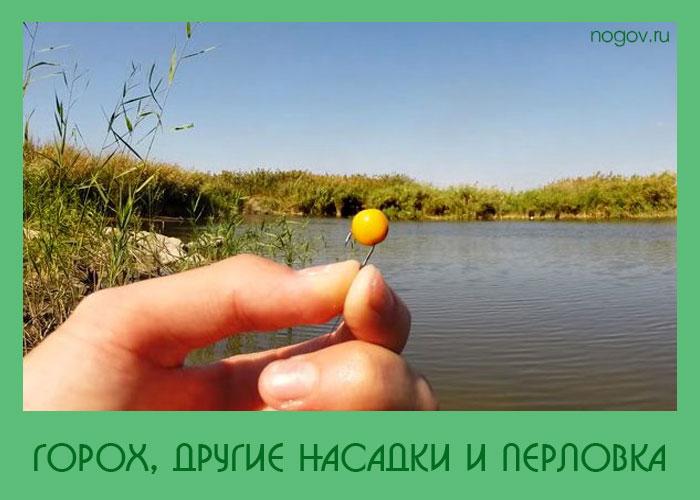 как на рыбалке горохом