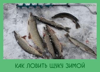 на что ловить щуку зимой