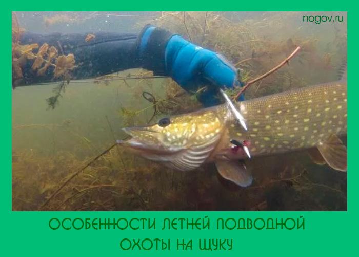 щука видео под водой на блесну