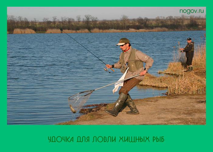 снасти на хищную рыбу