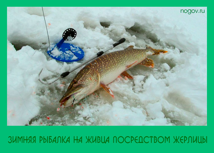 рыбалка жерлицы насадки