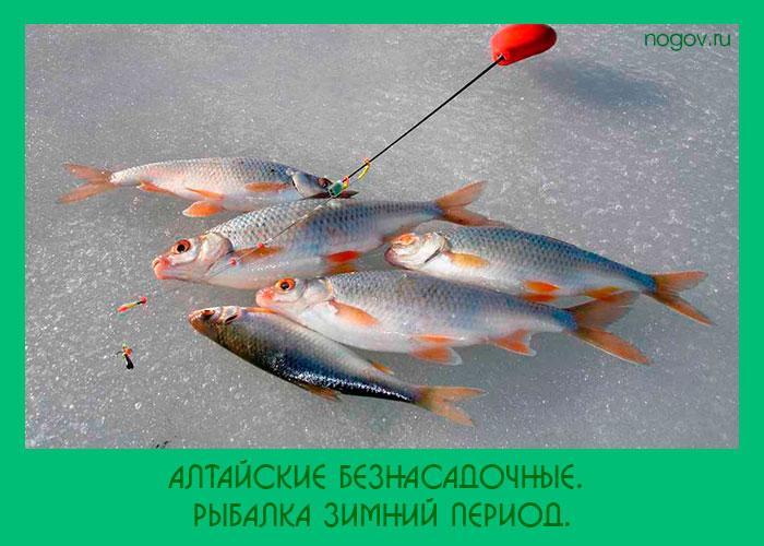 безмотылки и рыбалка на них