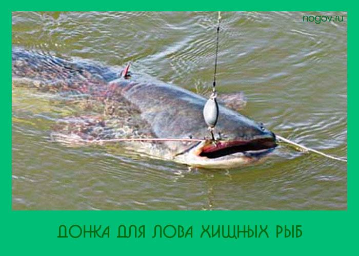 ловля большой рыбы с берега