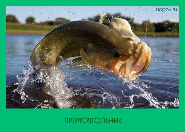 инстинкт рыбака