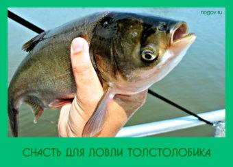 Cнасть для ловли толстолобика