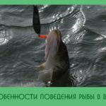 Особенности жизненного цикла и поведения рыб