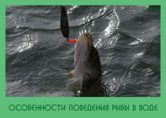 поведения рыбы в воде