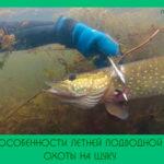 Особенности летней подводной охоты на щуку
